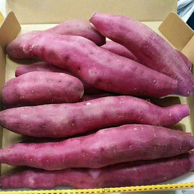 宮崎紅さつまいも2kg10~15個 食品/飲料/酒の食品(野菜)の商品写真