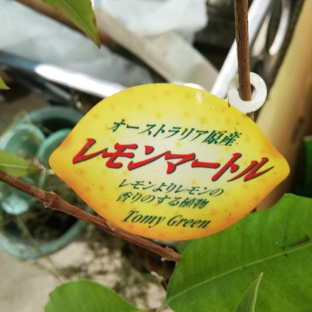 増量 ハーブ レモンマートル 食品/飲料/酒の飲料(茶)の商品写真