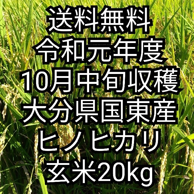 [送料無料] 令和元年大分県国東産 ヒノヒカリ玄米20kg 食品/飲料/酒の食品(米/穀物)の商品写真