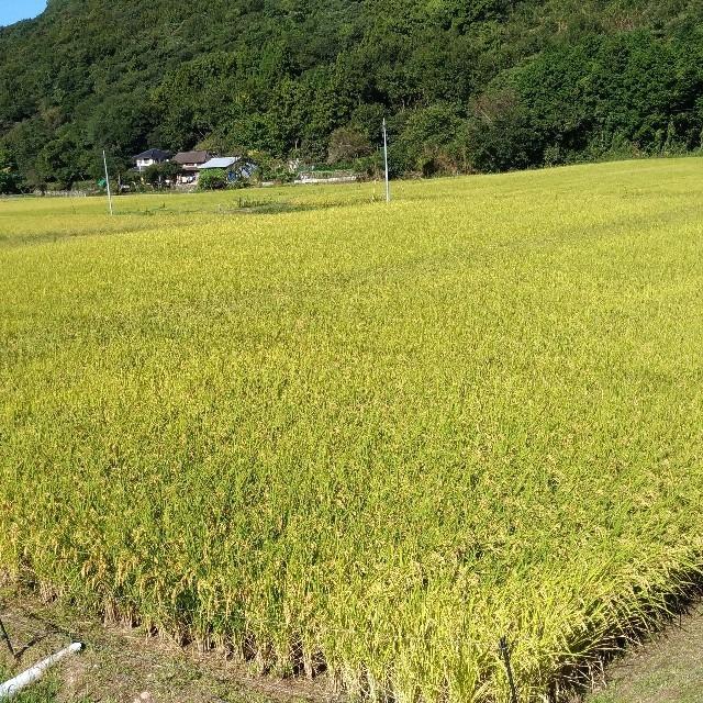 [送料無料] 令和元年大分県国東産 ヒノヒカリ白米5kg 食品/飲料/酒の食品(米/穀物)の商品写真