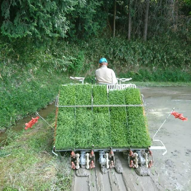 【近江農家直送!】キヌヒカリ5kgを精米 食品/飲料/酒の食品(米/穀物)の商品写真