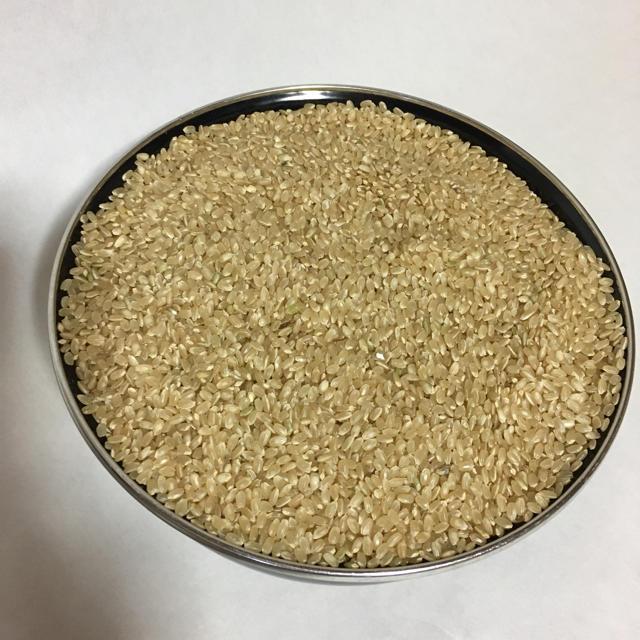 2019年産玄米30㎏ 食品/飲料/酒の食品(米/穀物)の商品写真
