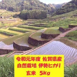 無農薬!自然栽培!農家直送!令和元年度佐賀県産!「伊勢ヒカリ」玄米5kg(米/穀物)