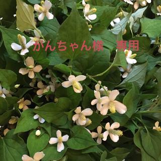 がんちゃん様 専用(野菜)
