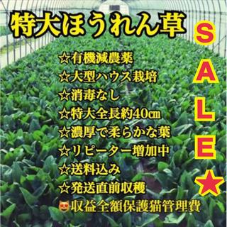 るいちん様専用ページ★特大有機ほうれん草18kg(野菜)