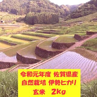 無農薬!自然栽培!農家直送!令和元年度佐賀県産!「伊勢ヒカリ」玄米2kg(米/穀物)