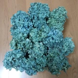 【nahoryn様確認用】アジサイドライフラワー 青緑~緑紫 ヘッドのみ12(ドライフラワー)