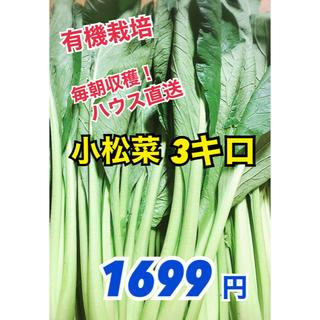 【減農薬栽培】小松菜3キロ こまつなスムージーにも(野菜)