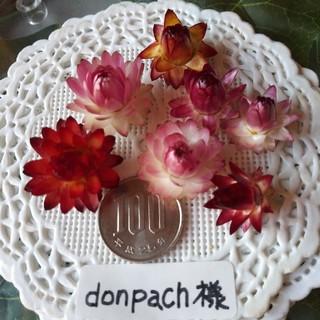 donpach様 専用ページ(ドライフラワー)