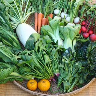 calm様専用 無農薬野菜 野菜セット 定期お届け便(野菜)