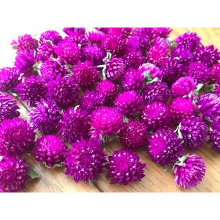 千日紅 パープル 100個 花材(ドライフラワー)