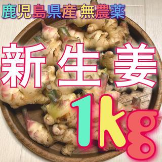 鹿児島県産 無農薬 新生姜 1kg(野菜)