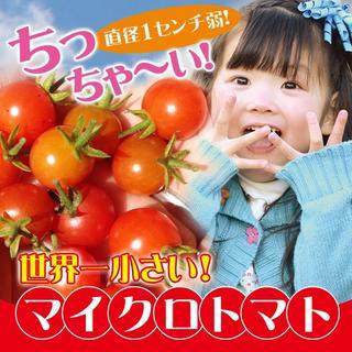 【珍しい】マイクロトマト赤色の種 20粒(長野県産)(野菜)