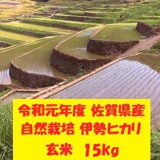 無農薬!自然栽培!農家直送!令和元年度佐賀県産!「伊勢ヒカリ」玄米15kg(米/穀物)