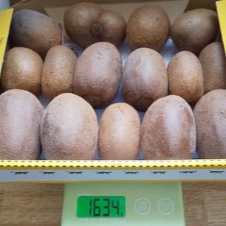 キウイフルーツ 15個 (フルーツ)