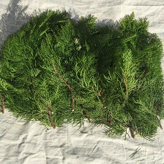 ヒバ 国産 檜葉 フレッシュ クリスマスリース花材 お正月飾り用(ドライフラワー)