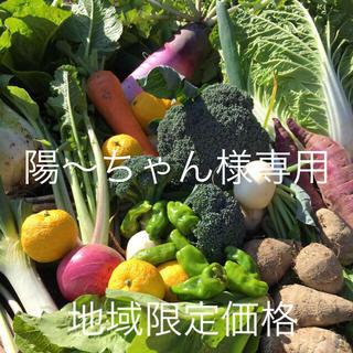 野菜BOX  LLサイズ  陽〜ちゃん様専用(野菜)