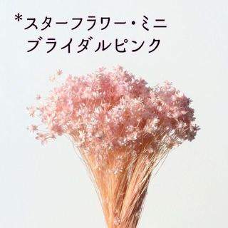 スターフラワー・ミニ ブライダルピンク 2g(ドライフラワー)