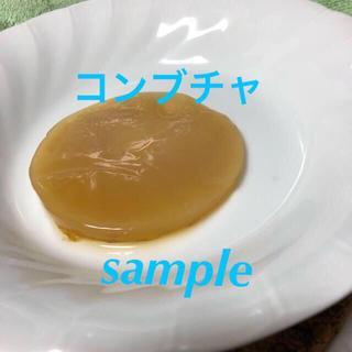 コンブチャ 500ml用(紅茶キノコ)(その他)