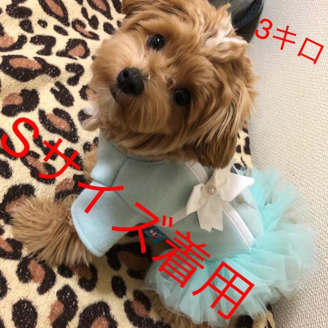 大人気!ラッピングチュールワンピース XSサイズ その他のペット用品(犬)の商品写真