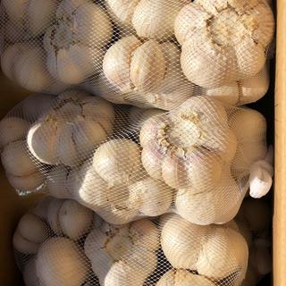 青森県産 福地ホワイト Lにんにく10キロ 送料無料(野菜)