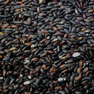 古代米 紫黒米 朝紫 玄米 2kg(米/穀物)