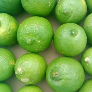レモン 無農薬 国産 約1kg(フルーツ)