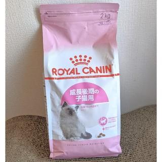 ROYAL CANIN - 未開封 ロイヤルカナンキトン 2kg