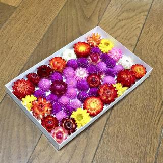 お花屋さんが作った貝細工と千日紅のドライフラワー    48(ドライフラワー)