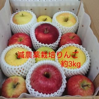 糸様専用【りんご玉手箱】青森県産リンゴ7品種約3kg(フルーツ)