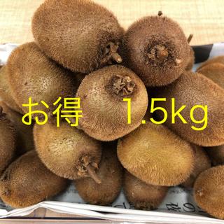 【お得】キウイ「ヘイワード」中玉1.5kg★自然農法・オーガニックフルーツ(フルーツ)