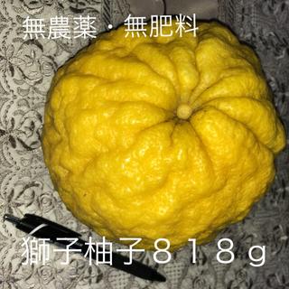 【稀少】獅子柚子818g★自然農法・オーガニック【限定1個販売】(フルーツ)