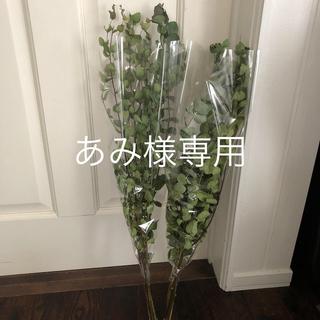 あみ様専用♡(ドライフラワー)