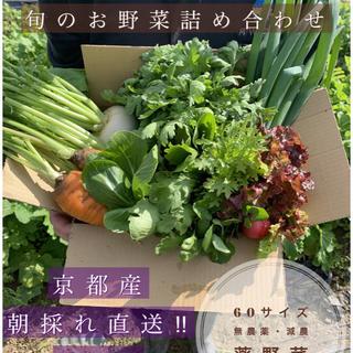 新鮮野菜6品プラスおまけ付き!!旬のお野菜セット(野菜)