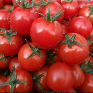 junpan様ご専用☆熊本県産ミニトマト3キロ(野菜)