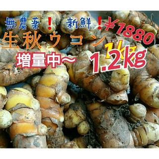 無農薬 無化学肥料❗【生秋ウコン1㎏】只今増量中~‼️新鮮❗長崎県五島列島より(野菜)