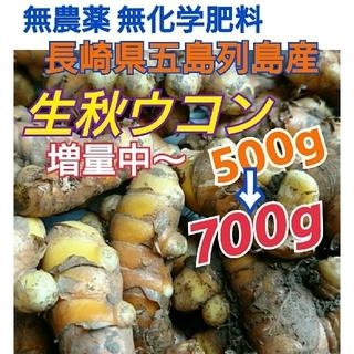無農薬❗【生秋ウコン500g】只今《700g》に増量中~長崎県五島列島産(野菜)