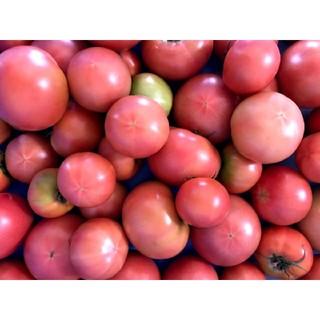 産地直送 減農薬トマト 桃太郎 約6kg 24個〜 はねだし 訳あり(野菜)