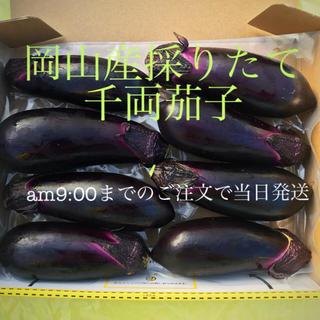 12/11 採れたて野菜🍆美味しいハウス栽培茄子8本(野菜)