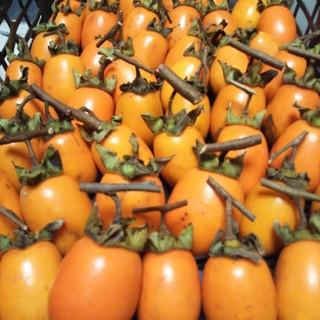 渋柿(野菜)
