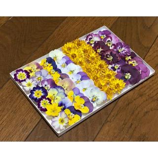 お花屋さんが作った可愛い8種のドライフラワー   35(ドライフラワー)