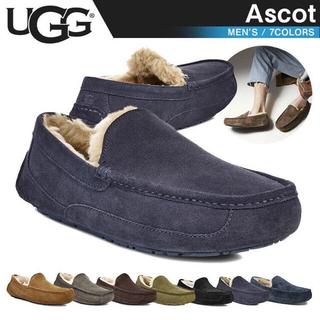 UGG - UGG  ascot エスプレッソ