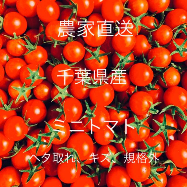 ミニトマト 1キロ 食品/飲料/酒の食品(野菜)の商品写真