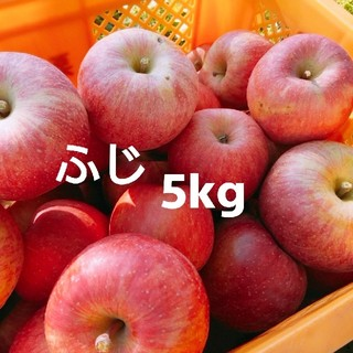 山形県産 りんご ふじ 5kg 訳あり