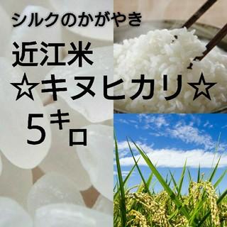 【近江農家直送!】キヌヒカリ5kgを精米