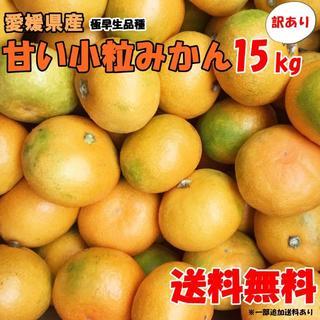 みかん 愛媛県産 小粒 15kg 送料込み 訳あり 極早生 早生 蜜柑