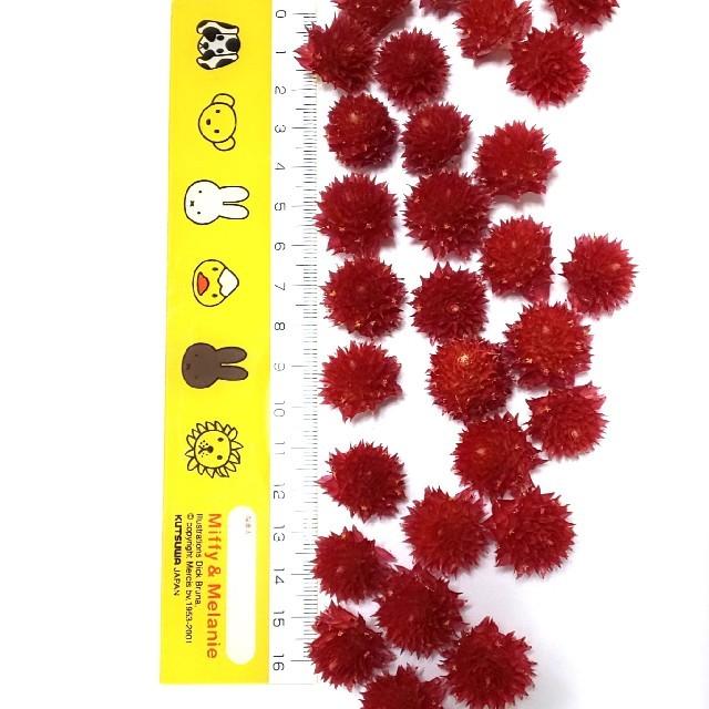 千日紅 60個 ストロベリーフィールズ 赤 クリスマス ハンドメイドのフラワー/ガーデン(ドライフラワー)の商品写真
