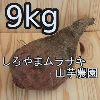 紫山芋(土付き)9kg