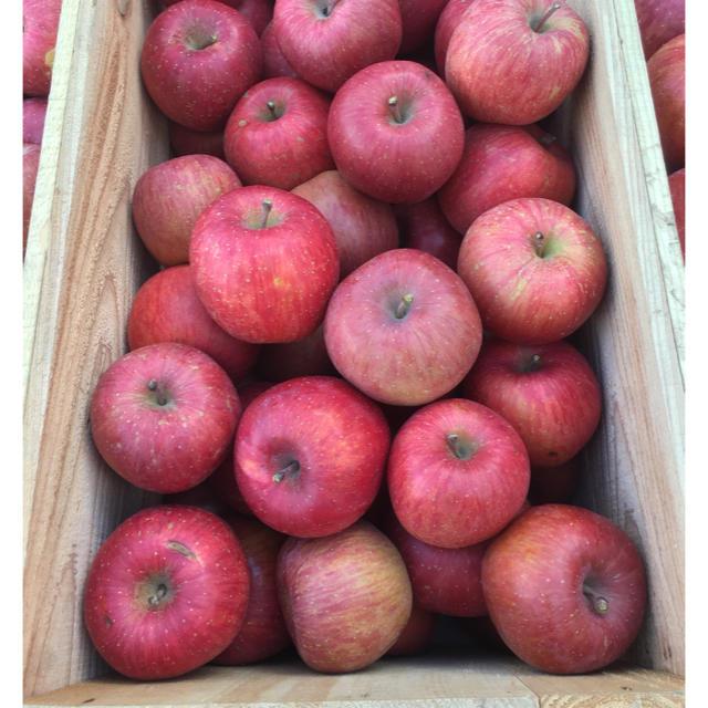 青森県産りんご 葉とらずふじ 4キロ 食品/飲料/酒の食品(フルーツ)の商品写真