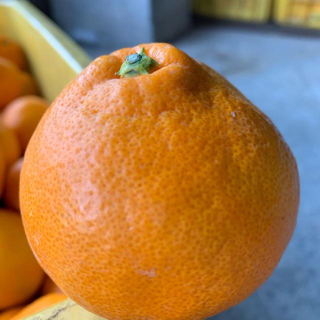 有田みかん 和歌山県産 早生みかん 訳あり 10キロ サイズ混合 食品/飲料/酒の食品(フルーツ)の商品写真